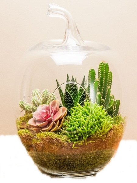 Arizona Terrarium